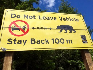 Bears... promise not t o leave my vehicle on the way ;-)