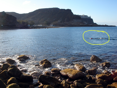 open water swims in begining of april, Gran Canarie is great.